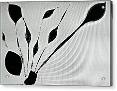 Acrylic Print featuring the photograph Perhaps A Plant by Geraldine Alexander