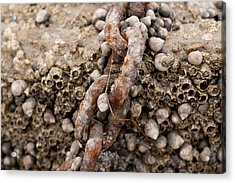 Periwinkle Protection  Acrylic Print by Eugene Bergeron