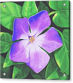 Acrylic Print featuring the painting Periwinkle by Sophia Schmierer