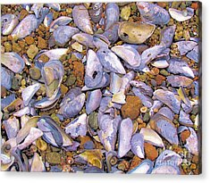 Periwinkles Muscles And Clams Acrylic Print