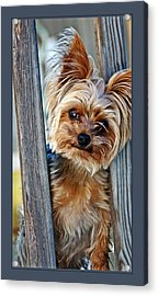 Acrylic Print featuring the photograph Perky Pup by Donna Proctor