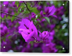 Perple Leafs Acrylic Print by Frederico Borges
