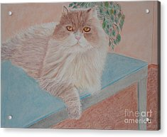Persian Cat Acrylic Print by Cybele Chaves