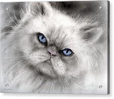 Persian Cat With Blue Eyes Acrylic Print by Svetlana Novikova