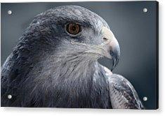 Peruvian Eagle Acrylic Print by Walter Iglesias