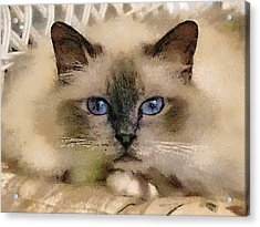 Pet Cat Acrylic Print