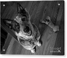 Pet Portrait - Forrest Acrylic Print