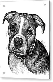 Pet Portraits Boxer Acrylic Print by Heidi Creed