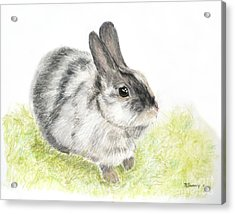 Pet Rabbit Gray Pastel Acrylic Print