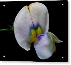 Petal Paint Acrylic Print