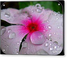 Acrylic Print featuring the photograph Petal Surfing by Patti Whitten