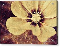 Petaline - T37d03a3 Acrylic Print by Variance Collections