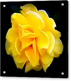 Petals And Lace Acrylic Print by Karen Wiles