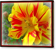 Acrylic Print featuring the photograph Petals Of Fire by Heidi Manly