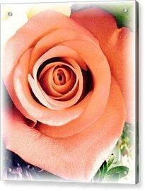 Petals Of Peach Acrylic Print