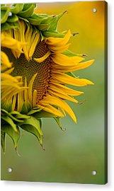 Acrylic Print featuring the photograph Petals by Ronda Kimbrow
