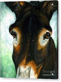Pete The Mule Acrylic Print