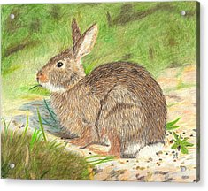 Peter Cottontail Acrylic Print by Sheila Byers
