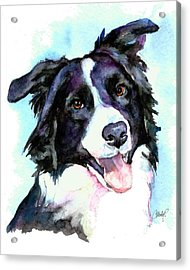 Petey Border Collie Acrylic Print