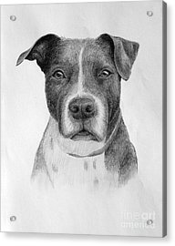 Acrylic Print featuring the drawing Petey by Denise M Cassano