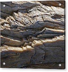Petrified Wood  Acrylic Print by Christine Burdine
