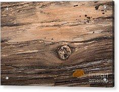 Petrified Wood Detail Acrylic Print by Vivian Christopher