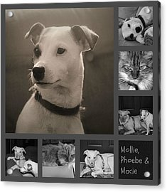 Pets Collage Acrylic Print by Carolyn Ricks