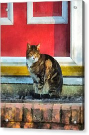 Pets - Tabby Cat By Red Door Acrylic Print by Susan Savad