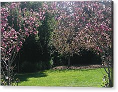Petty In Pink Acrylic Print by Marian Jenkins