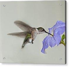 Petunia Delight Acrylic Print