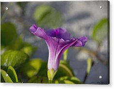 Acrylic Print featuring the photograph Petunia I by Kathy Ponce