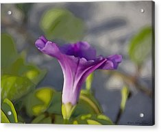 Acrylic Print featuring the photograph Petunia II by Kathy Ponce