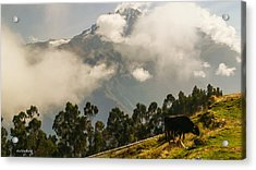 Peru Mountains With Cow Acrylic Print