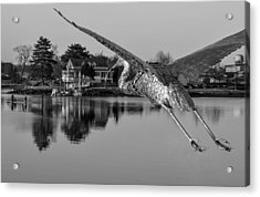Pewter Great Blue Heron Acrylic Print