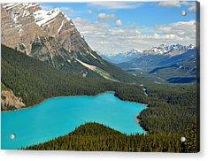 Peyto Lake Acrylic Print by Lisa Phillips