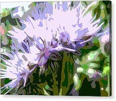Phacelia Acrylic Print by Bitten Kari