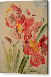 Phalaenopsis In Pink Acrylic Print by Valerie Lynch