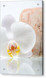 Phalenopsis And Rock 47 Acrylic Print