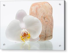 Phalenopsis And Rock 51 Acrylic Print