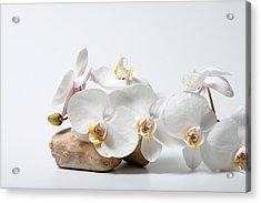 Phalenopsis And Rock 79 Acrylic Print