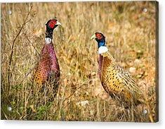 Pheasant Friends Acrylic Print