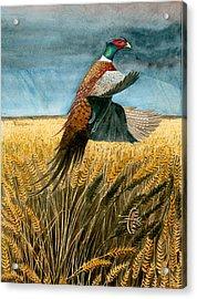 Pheasant Rising Acrylic Print