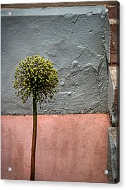 Acrylic Print featuring the photograph Philly Plant by Glenn DiPaola