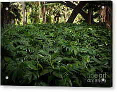 Philodendron Covering Acrylic Print