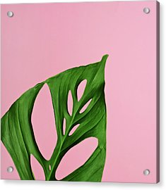 Philodendron Leaf On Pink Acrylic Print by Juj Winn