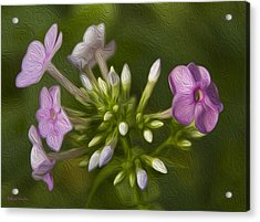 Phlox Acrylic Print