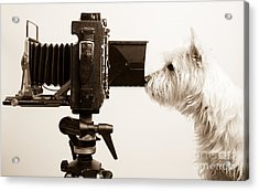 Pho Dog Grapher Acrylic Print by Edward Fielding