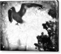 Phoenix IIi Acrylic Print by Aurelio Zucco