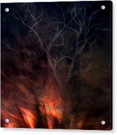 Phoenix One Acrylic Print