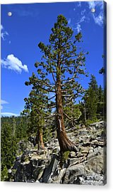 Trees Near Emerald Bay Lake Tahoe Acrylic Print